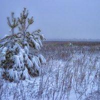 Туман :: Олег Чернов