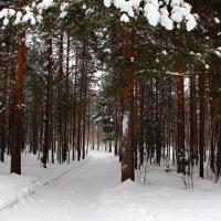 Зимняя дорожка :: Виктор Коршунов