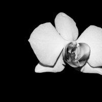 В черно-белом цвете.1 :: Viktoria Tkach
