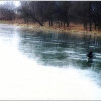 на первый лёд :: sv.kaschuk