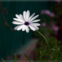 Серенада летнего полудня :: muh5257