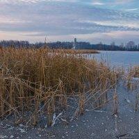 Морозное утро на озере. :: Виктор Евстратов