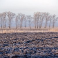 Утро...туман...декабрь... :: Vadim77755 Коркин