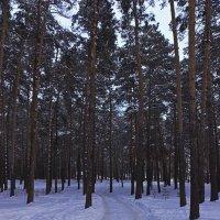 Дорога домой :: Leonid Krasnov