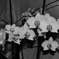 в черно-белом цвете.5 :: Viktoria Tkach