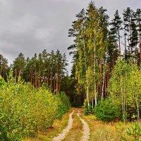 Осень  2014. :: Валера39 Василевский.