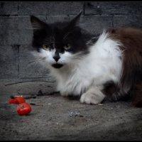 кошка с томатами - это не девочка с персиками! :: sv.kaschuk
