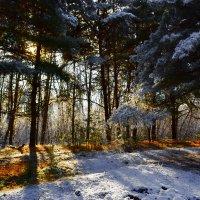 солнышко в деревьях :: snd63 Сергей
