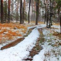 И в декабре бывает март... :: Лесо-Вед (Баранов)