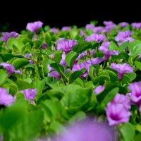 цветы, растущие на песке :: Юлия