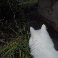 Охота ночью :: Владимир Ростовский