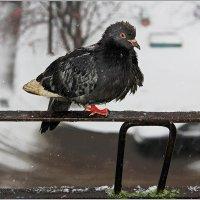 Как бы Зиму пережить! :: Роланд Дубровский