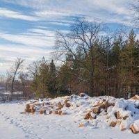 Зимой нужны дрова :: Любовь Потеряхина