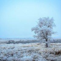 Зимние красоты :: Дмитрий Скубаков