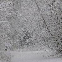 А снег идет,а снег идет. :: шубнякова