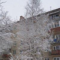 Зимой во дворе :: шубнякова