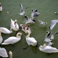 Птичий базар :: Ольга Голубева