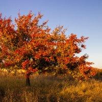 Провожая осень красной палитрой цветов... :: Надежда Хлыстова