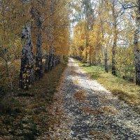 Золотая осень :: Alexander N