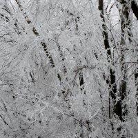 В зимнем наряде...3 :: Тамара (st.tamara)