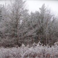 Зимний лес. :: Антонина Гугаева
