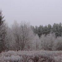 Зима. :: Антонина Гугаева