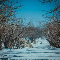 Яблоневый сад :: Виталий Терещенко