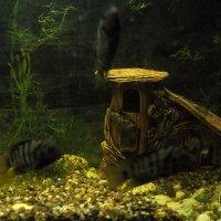 Плавают рыбешки..только не в пруду.. :: Екатерина Василькова