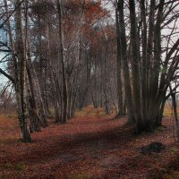 Осенняя дорога :: Дмитрий Лебедихин