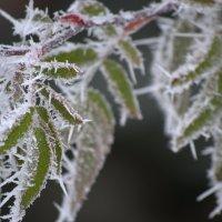 мороз и листва :: Igor Osh