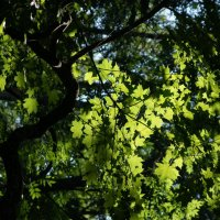 forest :: Влада Лаптева