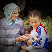Любимица :: Валерий Талашов