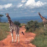 Далёкая и такая близкая Африка :: Евгений Печенин