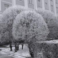 Иней :: Виктор Четошников