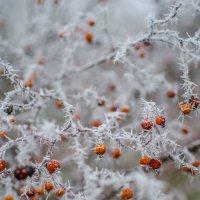чудо природы :: Катерина Терновая