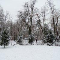 Первый день зимы в парке...5 :: Тамара (st.tamara)