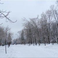 В парк пришла зима... :: Тамара (st.tamara)