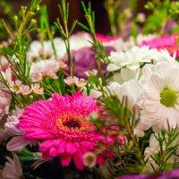 Цветы :: Alex Bush