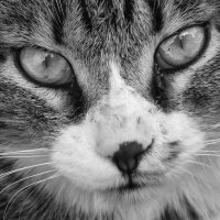 Мой первый котик :: Татьяна Муляренко