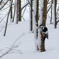 В зимнем лесу :: Ната Волга