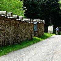 заготовка дров в швейцарском лесу :: Александр Корчемный