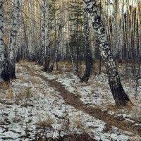 Начало зимы или конец осени :: Дмитрий Конев