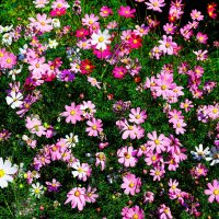 Это Весна ... цветочная поляна :: Damir Si