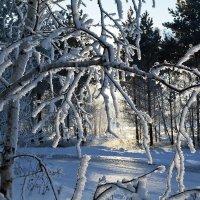 Зимний  свет :: Геннадий Супрун