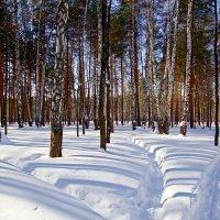 Снегу навалило :: Лидия (naum.lidiya)