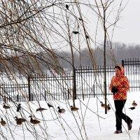 Утки на снегу :: Владимир Болдырев