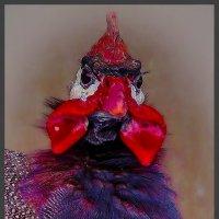 Студийный портрет-3 или и птичка вылетает... :: Shmual Hava Retro