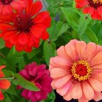 цветы :: Виктория ***
