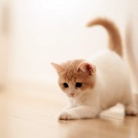 Игривый котёнок :: Эрнест Грутцин
