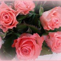 Розовые розы :: Вера